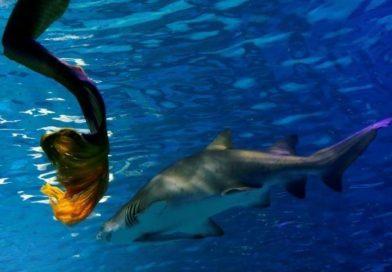 חשש שמאות אלפי כרישים ייטבחו בגלל חיסון לקורונה